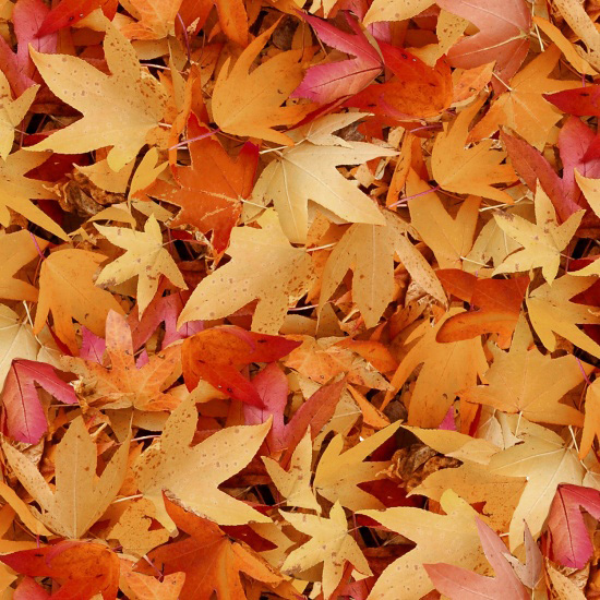 Autumn Leaves 8625-30