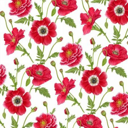White/Red Small Poppy