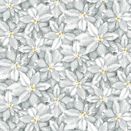 Pale Grey Poinsettia