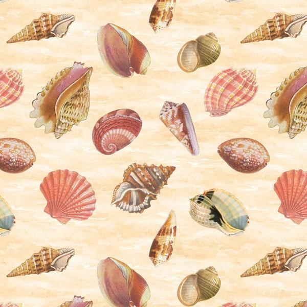 Cream Seashells