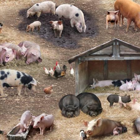 Elizabeth's Studio - Farm Animals-Pigs Scenic/Brown - 338-Brn