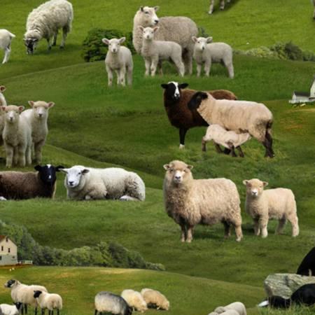 Green Farm Animals Sheep Scenic<br>360E-GRN