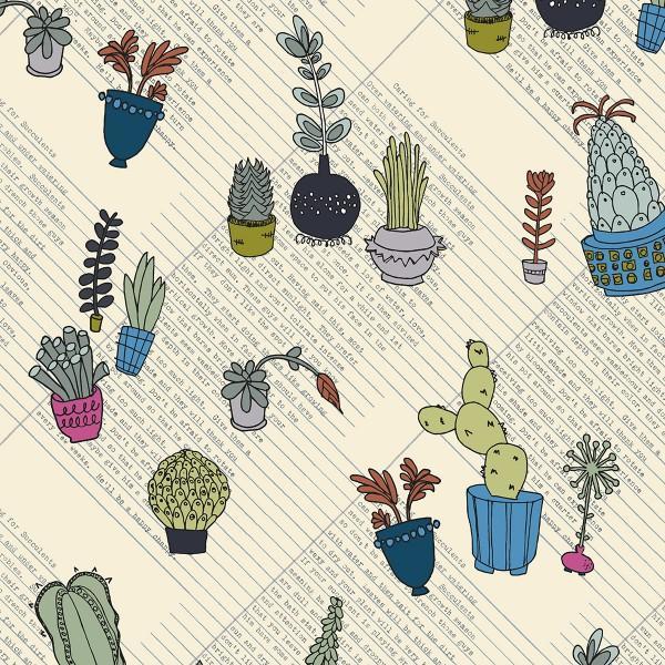 Multi Color Succulents