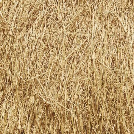 Windham Fabrics - Landscape by Whistler Studios - Tan Grass