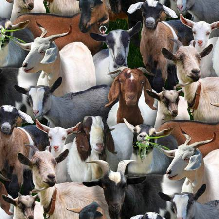 Goats on Black