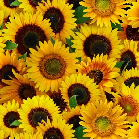 Yellow Sunflowers Packed