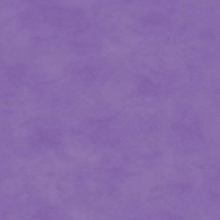 Violet Tulip Tonal
