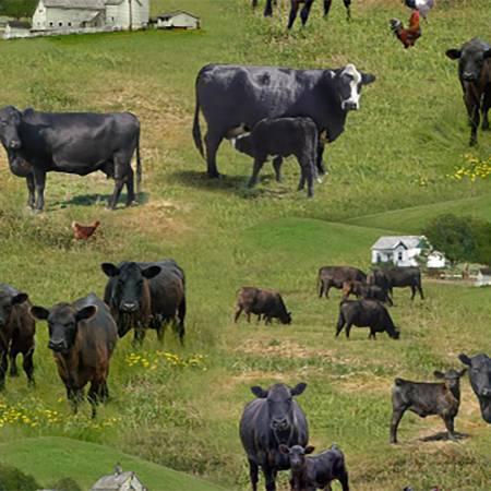 Green Farm Animal - Cows<br>515E-GRN