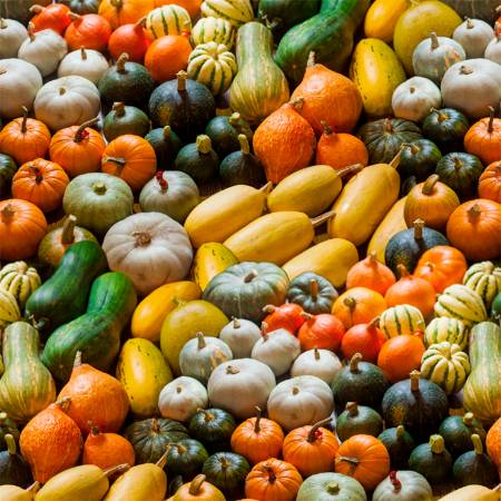 A La Carte Gourds Full of Gourdness