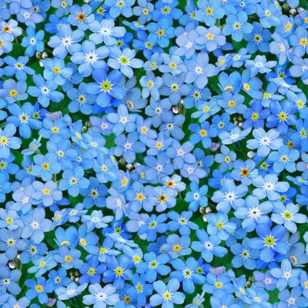WILMINGTON PRINTS WALKING ON SUNSHINE DK BLU BACK/LT BLUE FORGET ME NOTS 79270 445