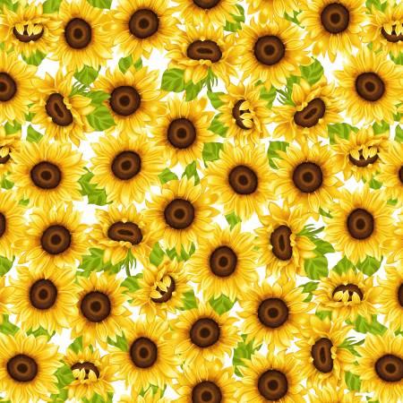 Sunny Sunflowers Yellow Sunflowers on White