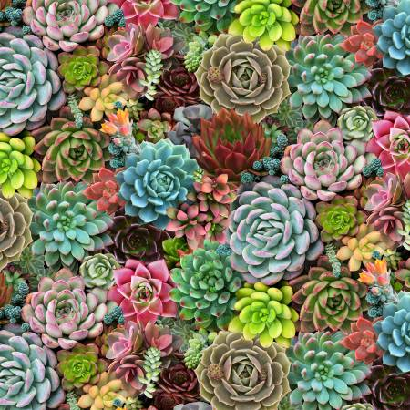 Multi Succulents Packed