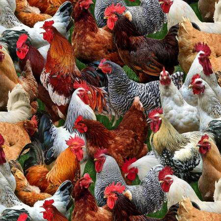 Multi Packed Chickens