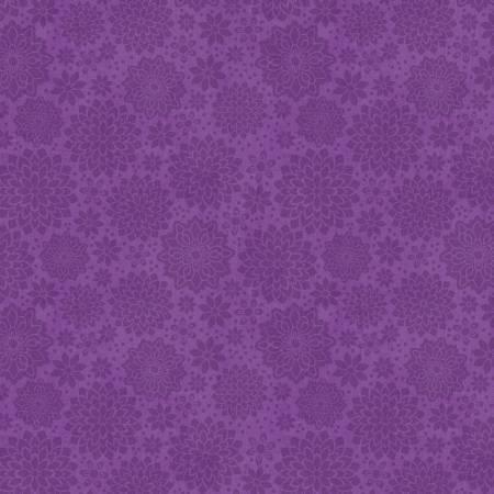 Purple Shadow Dahlia