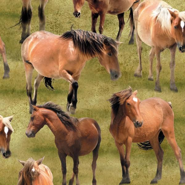 Greener Pastures - All Over Horses Green