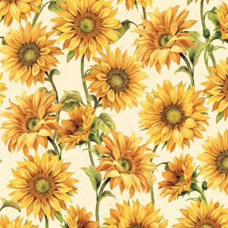 Cream Large Packed Sunflowers 86429 157