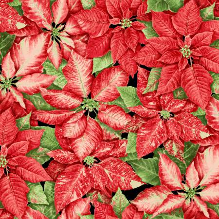 Red Packed Poinsettias