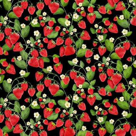Kanvas Black Strawberry Patch