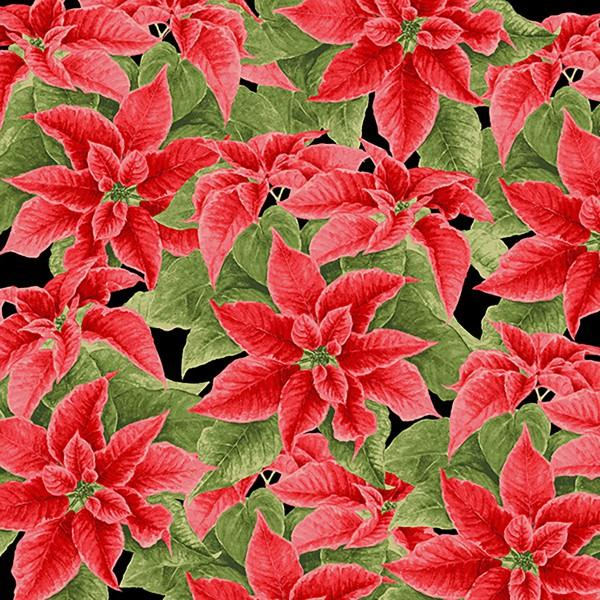Black Poinsettia