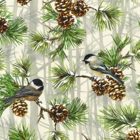 Winter Visitors  Chickadee