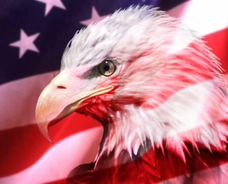 Eagle & Flag Panel Digitally Printed