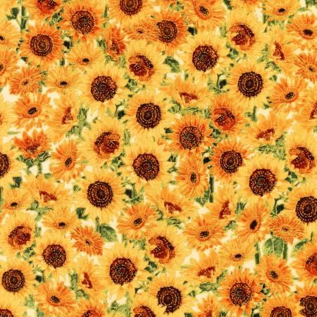 Harvest  Sunflowers