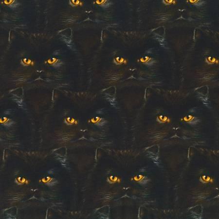 Black Whiskers & Tails AYVD195622