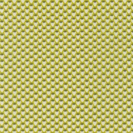 Paintbox - Pickle