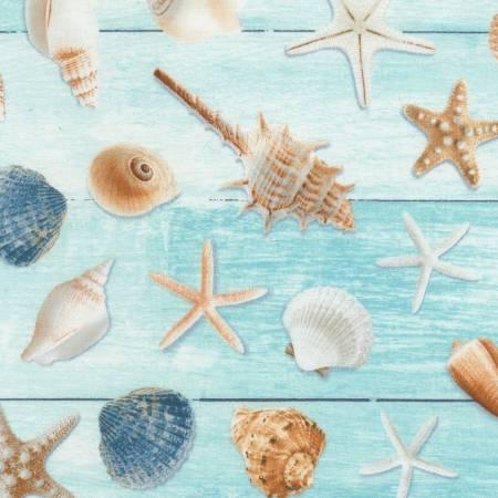 Seashells on Wood Aqua