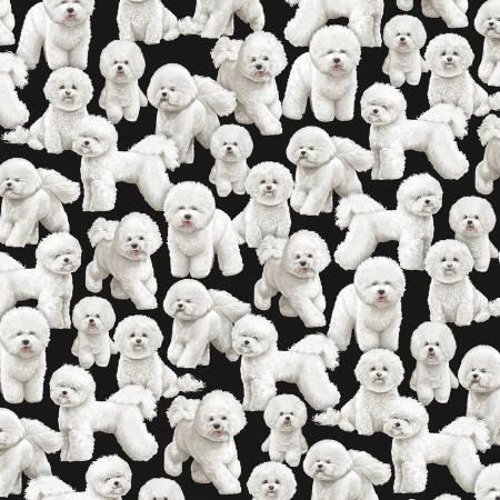 Bijon Black Pure Breeds Dogs