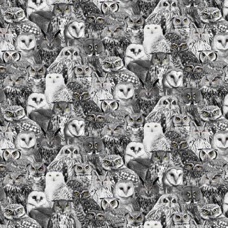 Wicked - Black Owls