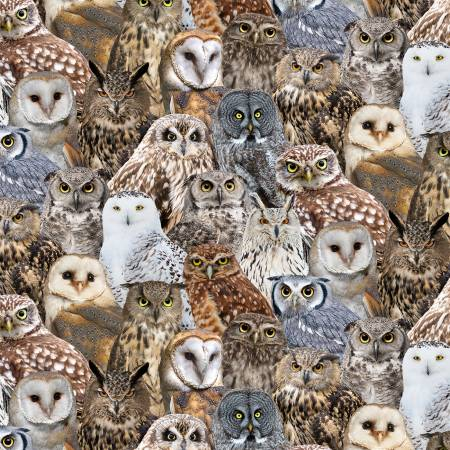 Timeless Treasures BIRD C7947 MULTIP Packed Owls