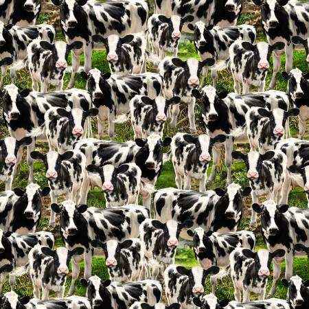Cows C8337 Multi