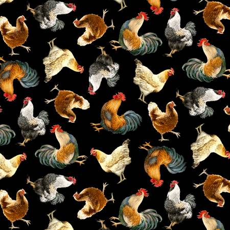 Black Chickens & Roosters