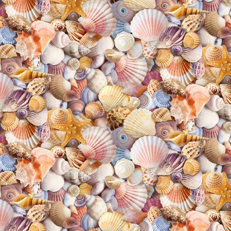 Multi Assorted Packed Beach Shells