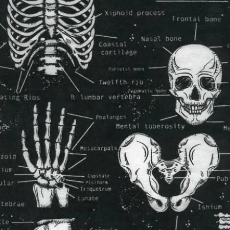 Black Glow in the Dark Skeleton by Timeless Treasures