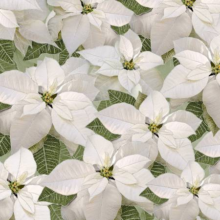 TT- Holiday White Poinsettia w/Metallic