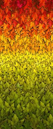 Harvest 8540 Ombre Leaves Metallic