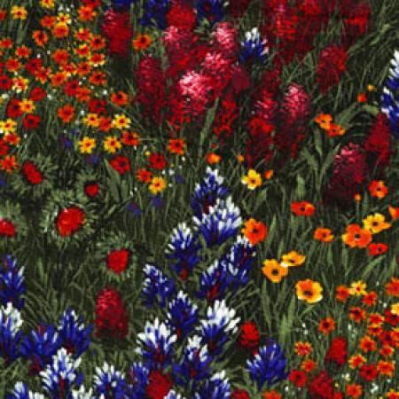Texas Wildflowers - Multi