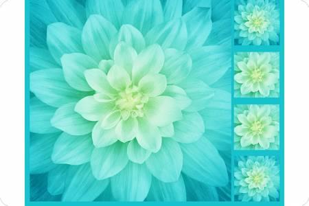 Big Dream Floral - Cuddle Panels