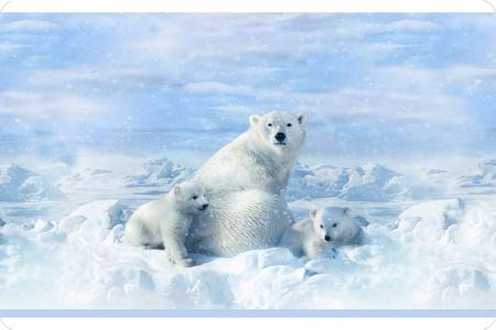 Shannon Polar Bear Digital Cuddle Panel