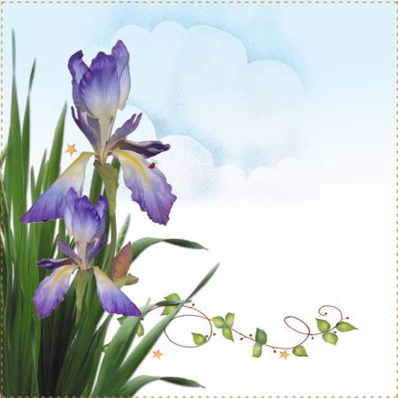 Labels - Iris 2 - 6 x 6