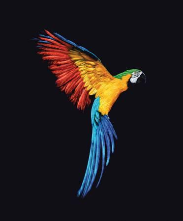 It'S A Crayola World Parrot Panel