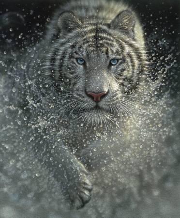 On Safari White Tiger Poster Panel