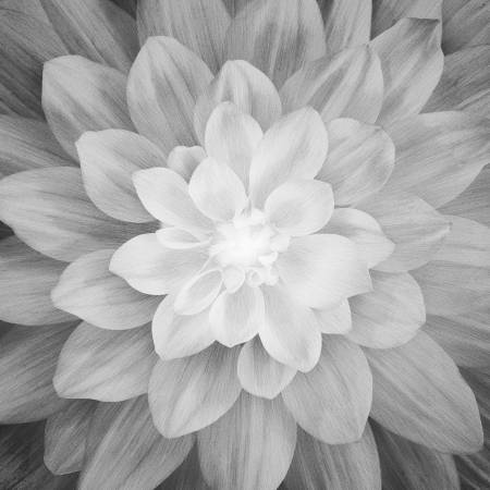 Onyx Large Flower 43in x 43in Digitally Printed