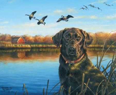 Riley Blake Fish And Fowl 36 Panel Faithful Friend