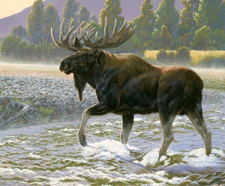 Nature's Finest 36in Panel, P9951R-MOOSE