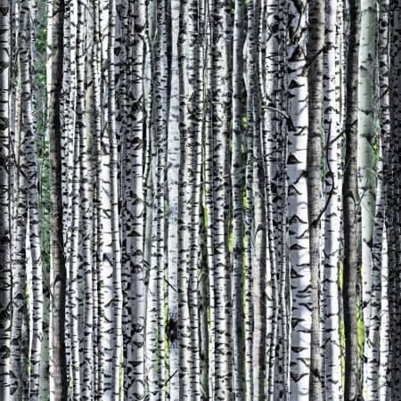 Nature's Narratives - Birch