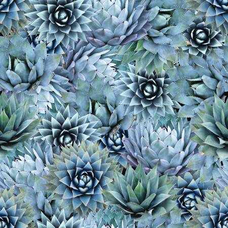 Agave Nature's Narratives