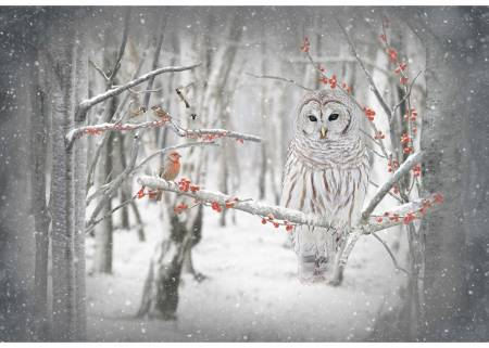 Birch Call of the Wild Owl Panel 30in x 43-1/2in by Hoffman Quilting Fabric Panels